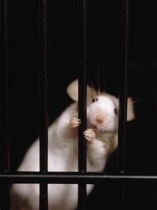 Mouse Behind Bars by Rudi Von Briel