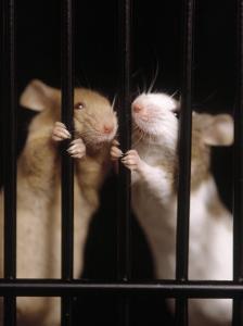 Two Mice Behind Bars by Rudi Von Briel