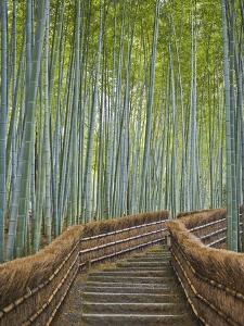 Bamboo Lined Path at Adashino Nembutsu-ji Temple by Rudy Sulgan
