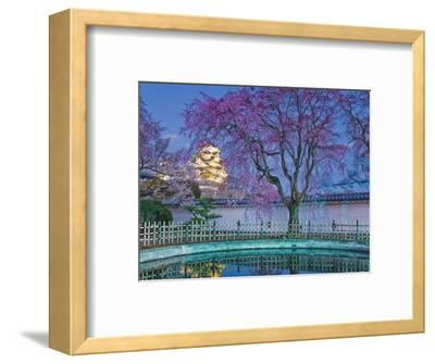 Himeji Castle Behind Blooming Cherry Trees at Twilight