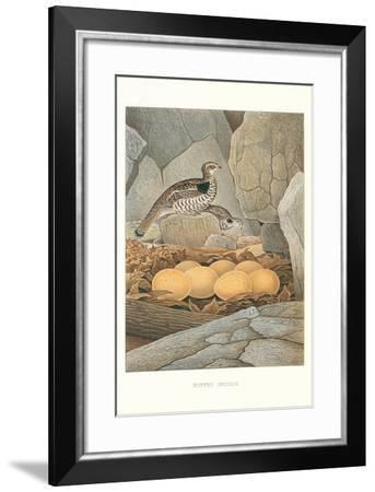 Ruffed Grouse Nest and Eggs--Framed Art Print
