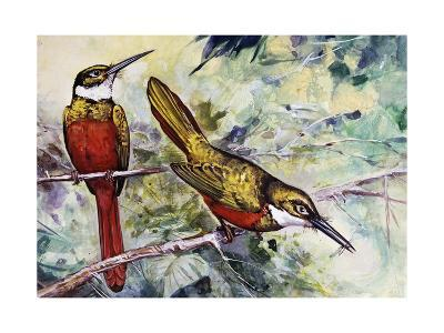 Rufous-Tailed Jacamar (Galbula Ruficauda), Galbulidae--Giclee Print