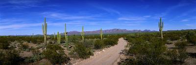 Rugged Road in Sonoran Desert Arizona USA--Photographic Print