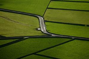 Green by Rui Caria