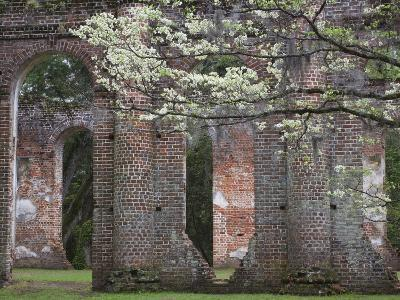 Ruins in the Spring of Old Sheldon Church, South Carolina, Usa-Joanne Wells-Photographic Print