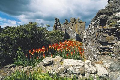 Ruins of Dunnottar Castle, 15th-17th Century, Stonehaven, Scotland, United Kingdom--Photographic Print