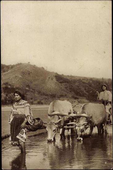 Rumänien, Wasserbüffel Ziehen Einen Pflug Über Das Wasser--Giclee Print
