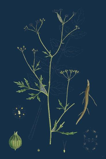 Rumex Scutatus; French Sorrel--Giclee Print