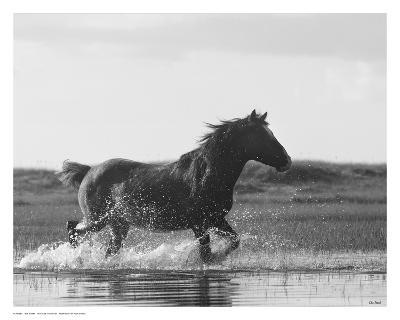 Run Like the Wind-Eve Turek-Art Print