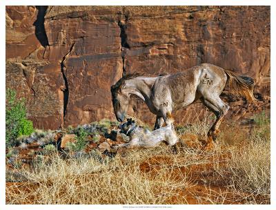 Running Horses I-David Drost-Giclee Print