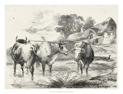 Rural Charms I-Unknown-Giclee Print