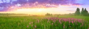 Rural Summer Landscape with Sunrise, a Blossoming Flowers Meadow and Fog. Panorama Sunrise
