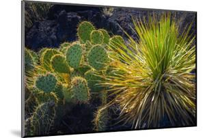 Cactus on Malpais Nature Trail, Valley of Fires Natural Recreation Area, Carrizozo, New Mexico, Usa by Russ Bishop