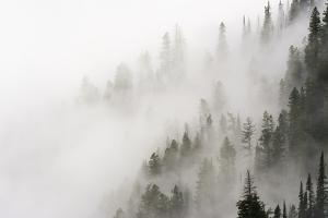 Cloud Forest, Glacier National Park, Montana, Usa by Russ Bishop