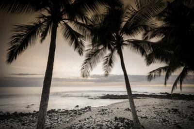 Coconut Palms and Surf at Dusk, Kailua-Kona, Hawaii, Usa by Russ Bishop