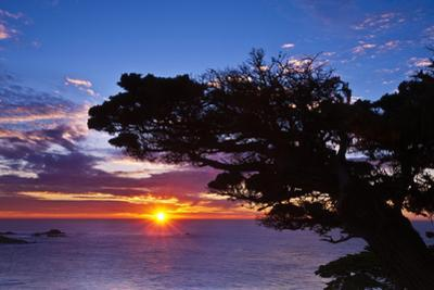 Cypress Tree at Sunset, Point Lobos State Reserve, Carmel, California, Usa by Russ Bishop