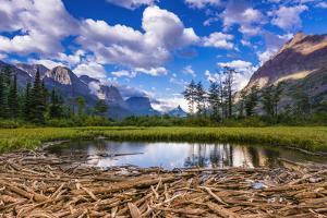 Driftwood and Pond, Saint Mary Lake, Glacier National Park, Montana by Russ Bishop