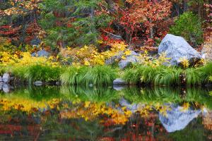 Fall color and grasses along the Merced River, Yosemite Valley, Yosemite National Park, California by Russ Bishop