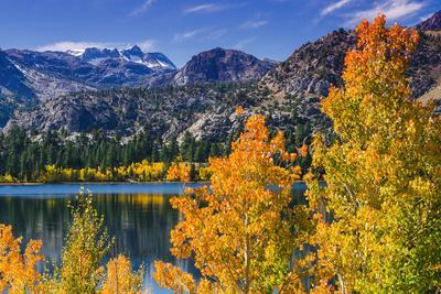 Golden Fall Aspen at June Lake, Inyo National Forest, Sierra Nevada Mountains, California, Usa