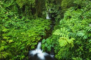Jungle stream, Akaka Falls State Park, The Big Island, Hawaii, USA by Russ Bishop
