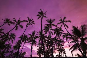 Palm trees at sunset, Pu'uhonua O Honaunau National Historic Park, Kona Coast, Hawaii by Russ Bishop