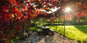 Sunlight Through Autumn Grape Vines, Korana Village, Plitvice Lakes National Park, Croatia by Russ Bishop