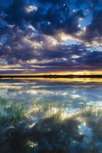 Wetlands at Sunrise, Bosque Del Apache National Wildlife Refuge, New Mexico, Usa by Russ Bishop