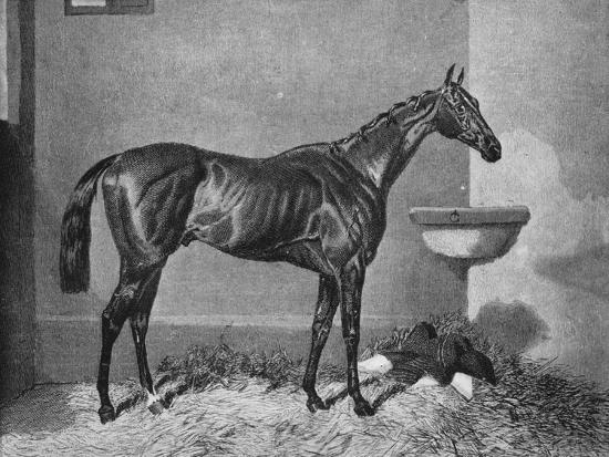 'Russborough', 19th century, (1911)-Unknown-Giclee Print