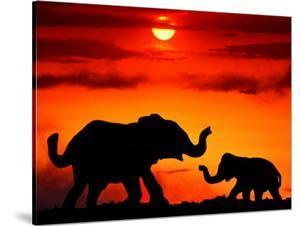 Adult and Young Elephants, Sunset Light by Russell Burden