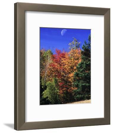 Autumn Trees with Moon, Vermont