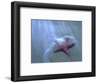 Harris Beach, Starfish, Oregon