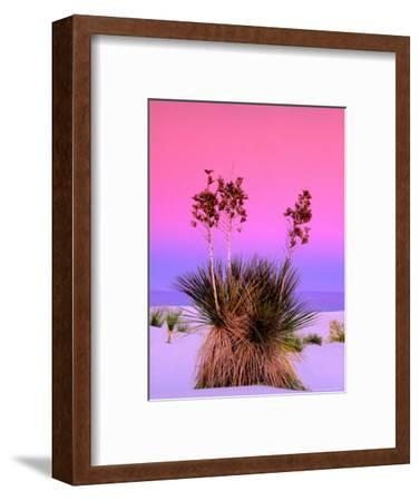 Pink Morning Sky with Yucca