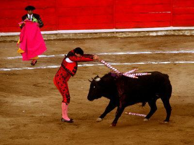 Bullfights Begin with Bleeding of the Bull, San Luis Potosi, Mexico