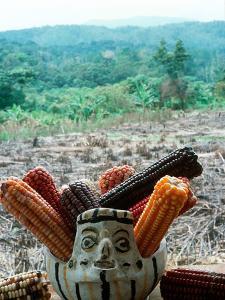 Corn That Lacandons Grow in Milpas, Selva Lacandona, Metzabok, Chiapas, Mexico by Russell Gordon