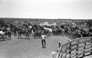 Texas: Cowboy, 1939 by Russell Lee