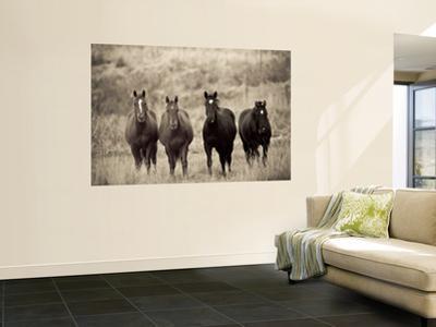 Horses, Montana, USA