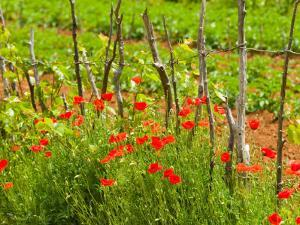 Poppy Field, Krk, Croatia by Russell Young