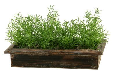 Rustic Asparagus Fern Planter