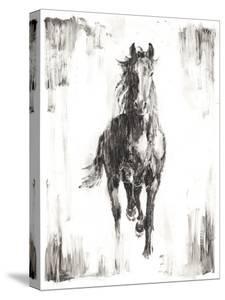 Rustic Black Stallion I