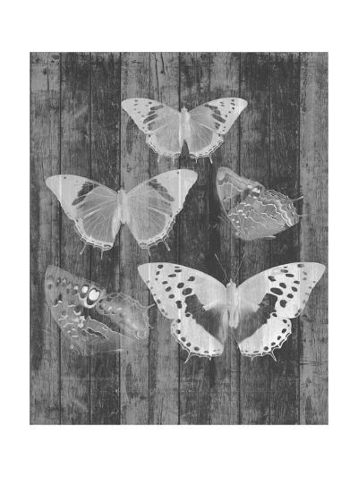 Rustic Butterfly Chart II-Jennifer Goldberger-Art Print