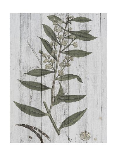 Rustic Greenery III-Jennifer Goldberger-Art Print