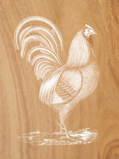 Rustic Rooster--Art Print