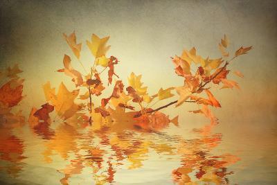 Rusty Fall Stripe-Philippe Sainte-Laudy-Photographic Print