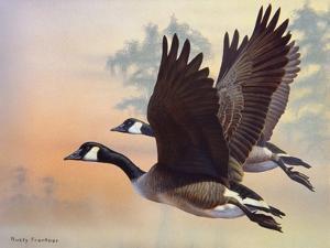 Canada Geese by Rusty Frentner