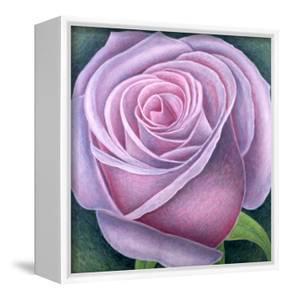 Big Rose by Ruth Addinall