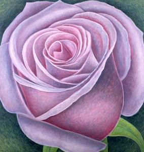 Big Rose by Ruth Addinall