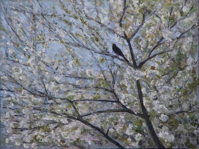Blackbird Singing in Cherry Blossom