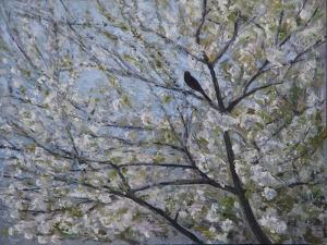Blackbird Singing in Cherry Blossom by Ruth Addinall