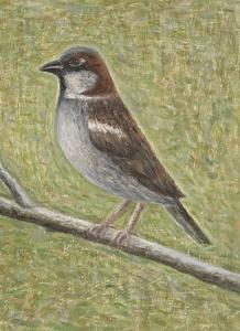 House Sparrow by Ruth Addinall