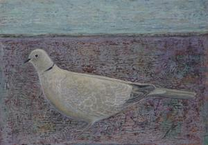 I am the Collared Dove by Ruth Addinall